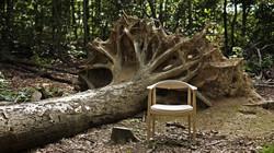 503_oak_tree.jpg
