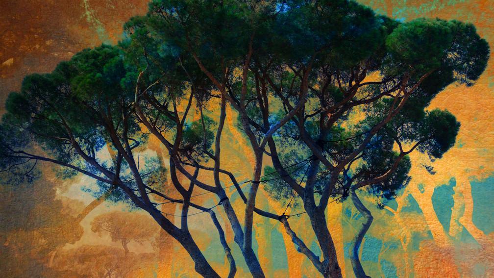 Villa Medicis les pins