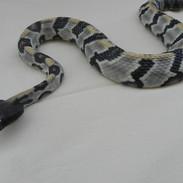 "Timber Rattlesnake - 40"" Replica"