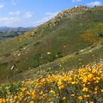 highland valley flowers