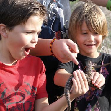 fun with gator lizards