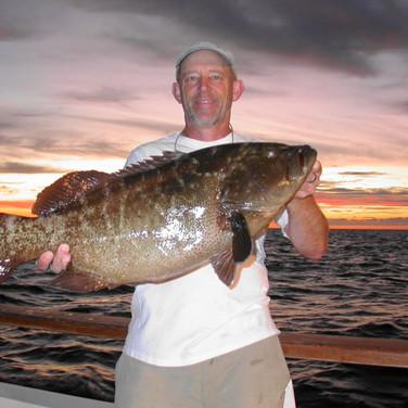 Sunrise Grouper