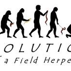 Evolution of a Field Herper