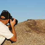 Snake Paparazzi