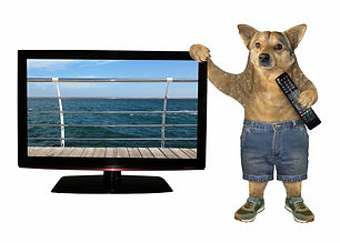 bigstock-The-Beige-Dog-In-Shotrs-And-Sh-