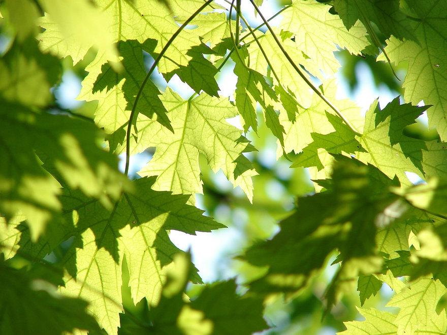 leaves-291024_1920.jpg