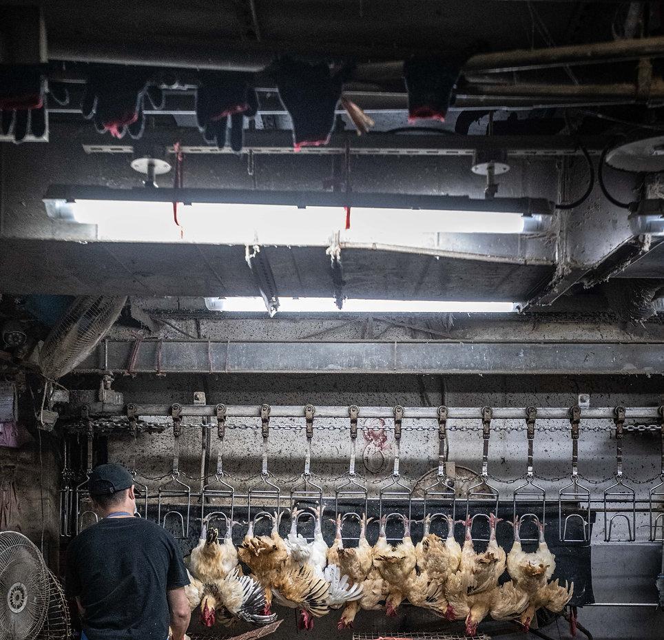 ChickenSlaughterhouse_Taiwan_JMcArthur_2