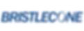 Bristlecone, Partner von Passionate Digital W78 GesmbH, Beratung für Management / Digitalisierung/ Einkauf bzw. Beschaffung / SAP Ariba