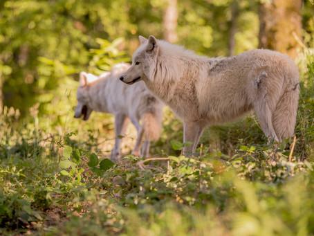 Le parc animalier lance un financement participatif