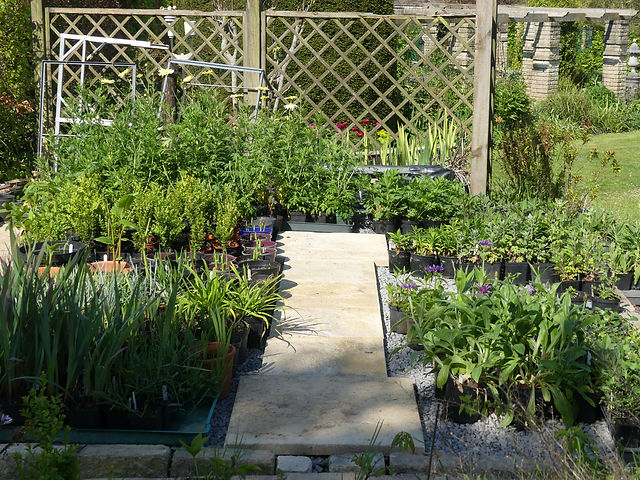 Roys Plants.JPG