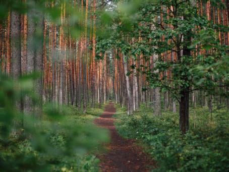 Trouver son chemin grâce aux odeurs