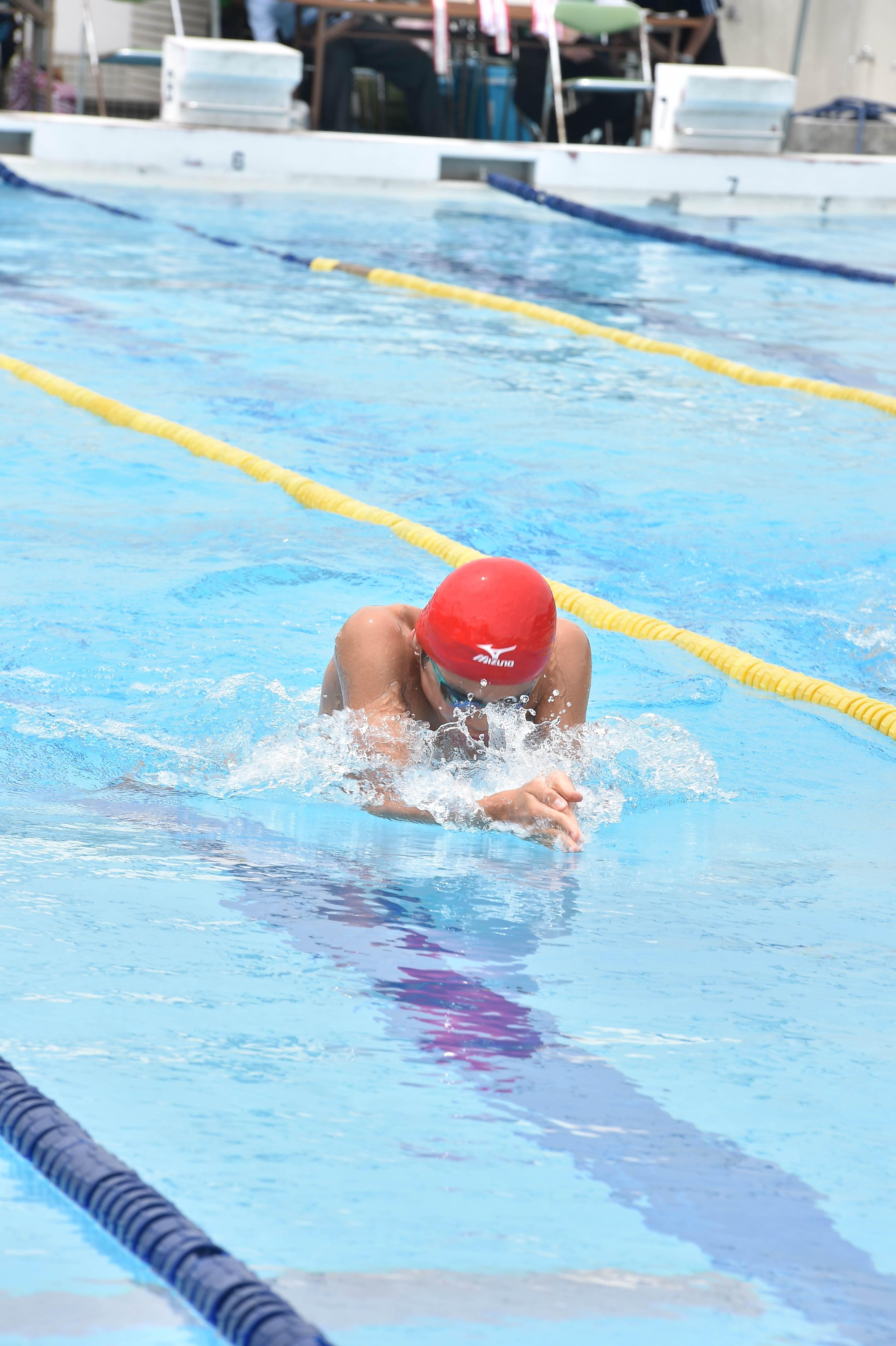 水泳 (53)