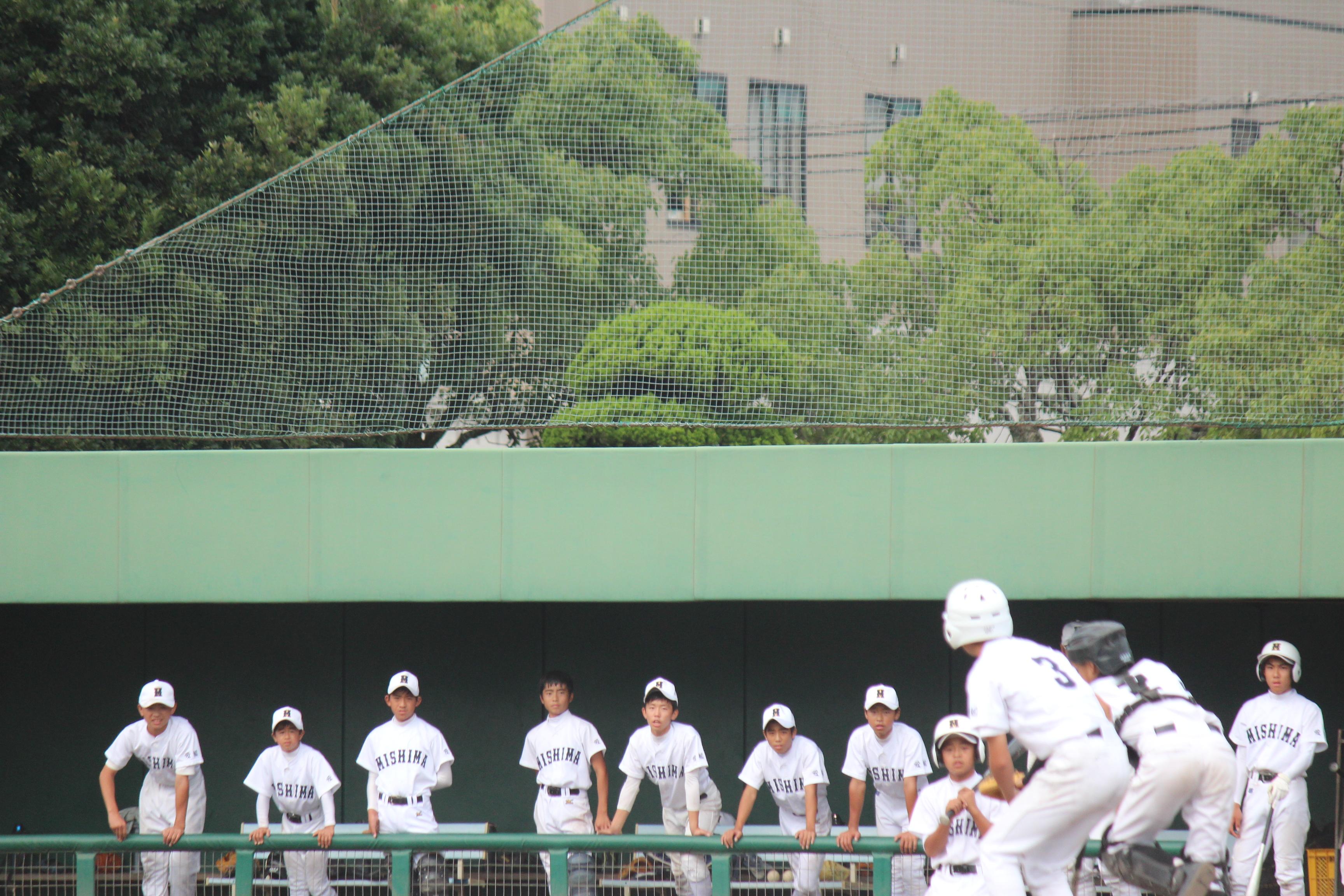 野球 (501)