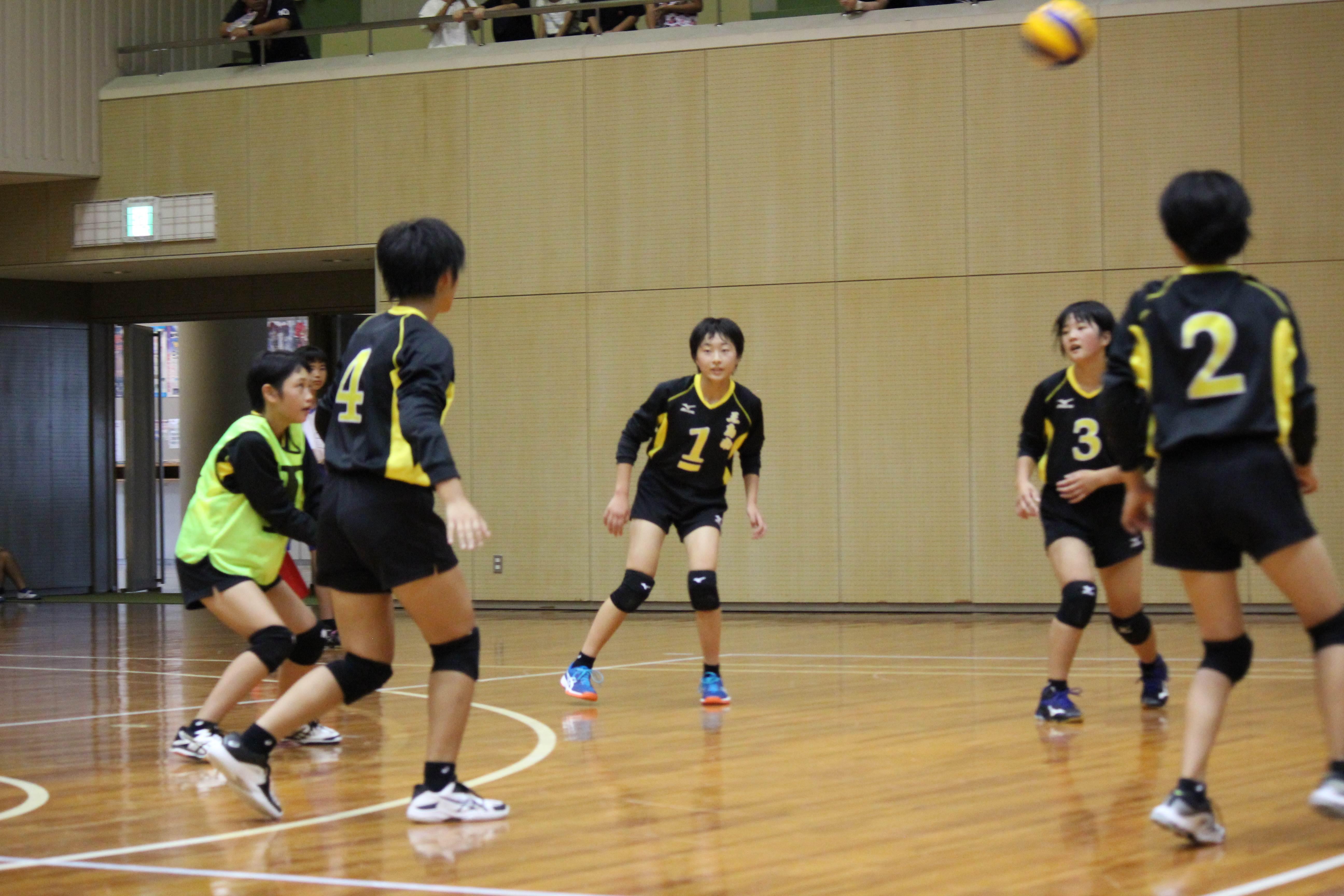 バレーボール (498)
