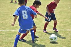 mini_soccer (683)