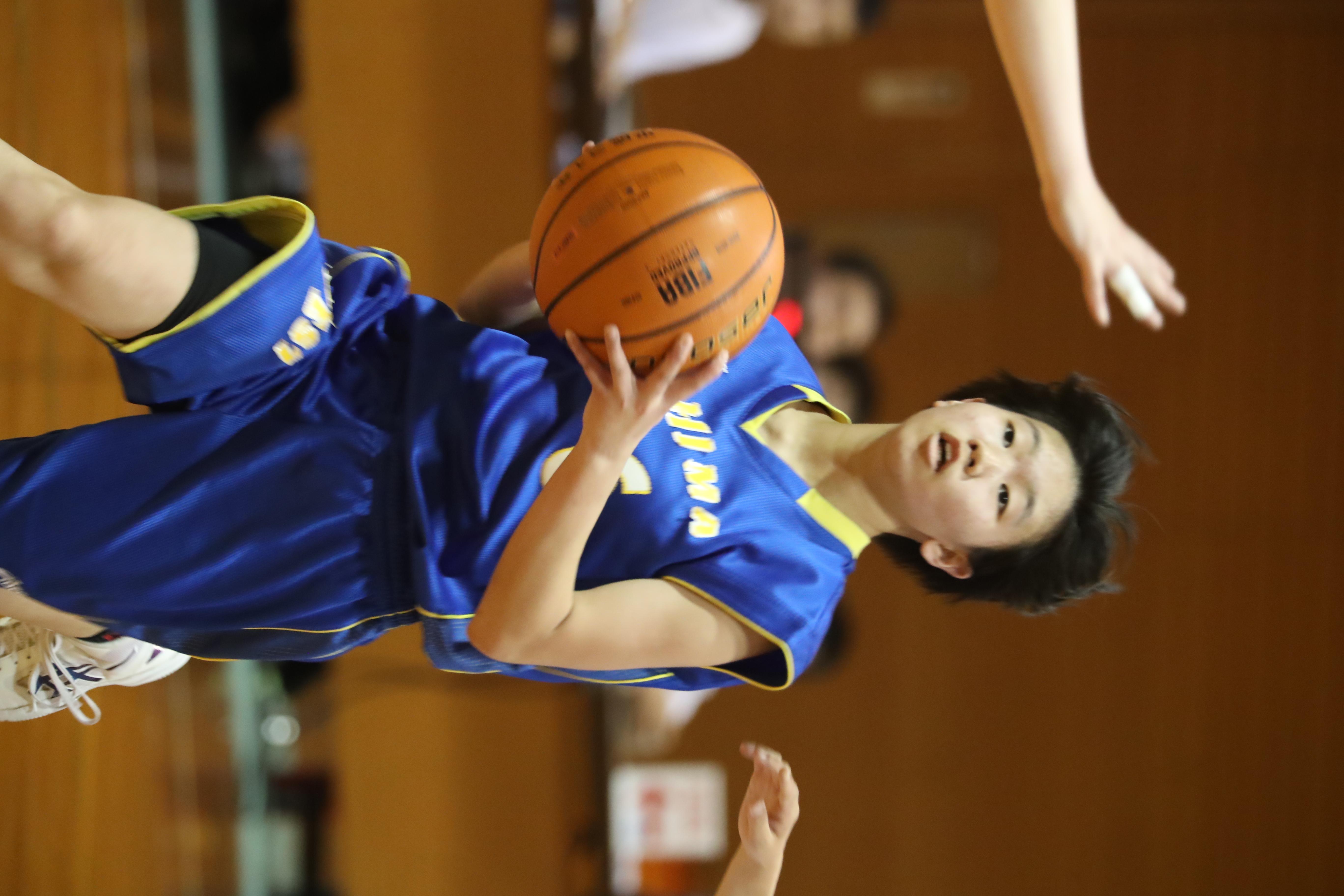 バスケット (310)