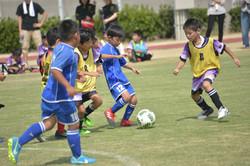 mini_soccer (606)