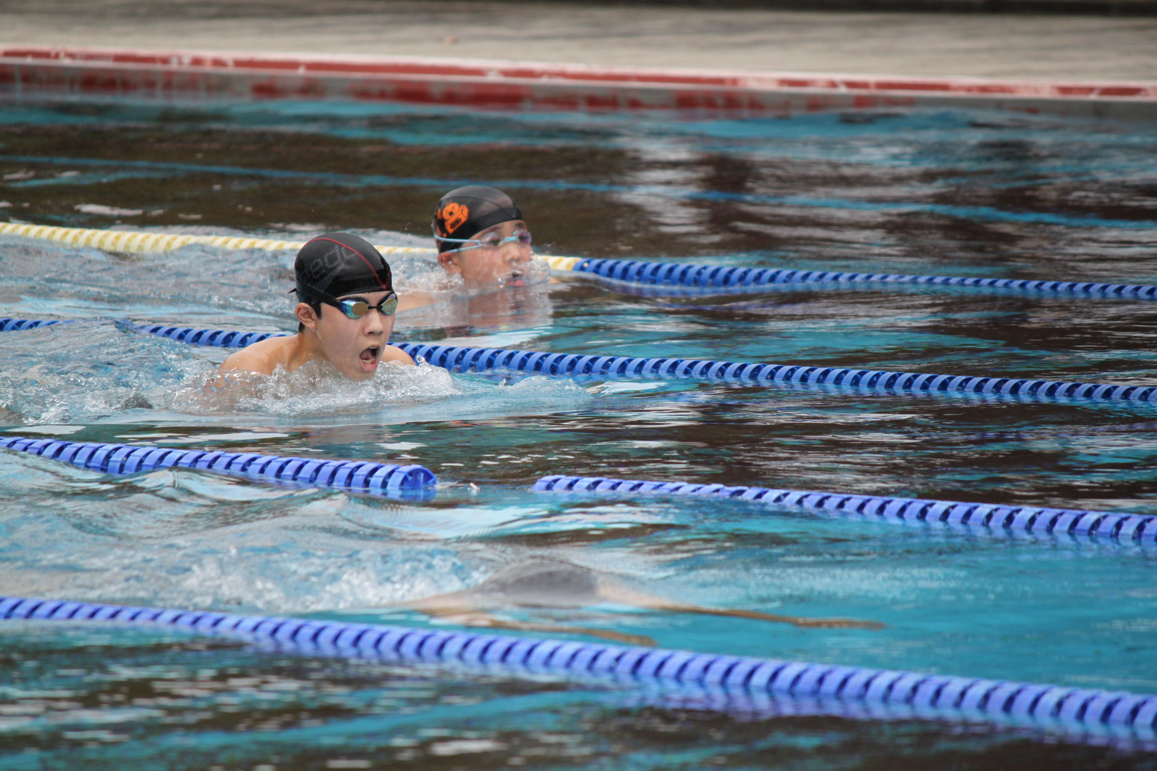 水泳競技 (55)