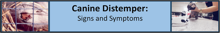 Canine distemper signs and symptoms