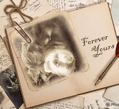 Forever yours ferret photo
