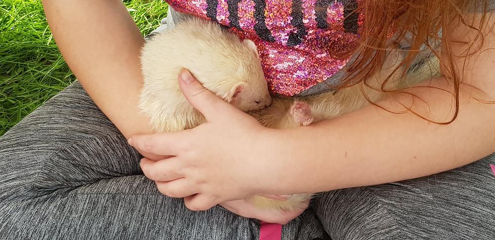 child cuddling ferret