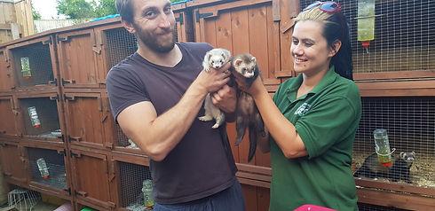 Couple adopting ferrets