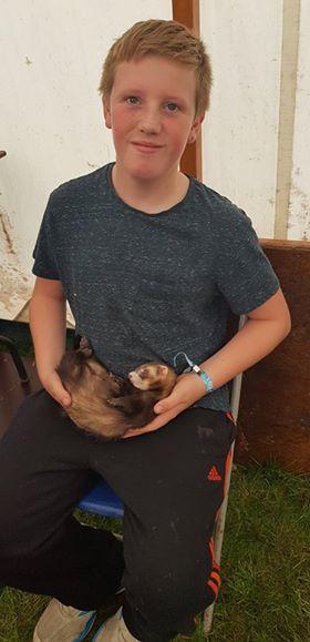 sleepy ferret in lap