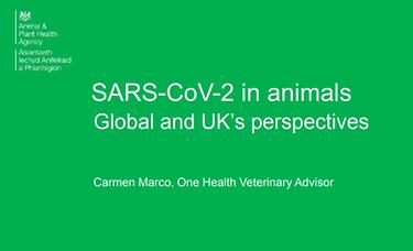 SARS-CoV-2-presentation. button.png