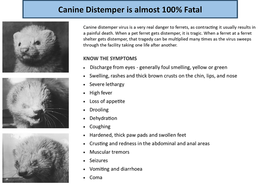 Canine distemper picture example