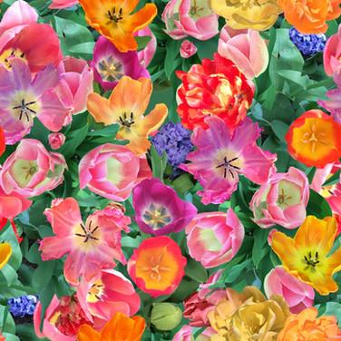 Tulip Happy