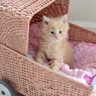 Barbie and Kéfir kitten at 5 weeks old