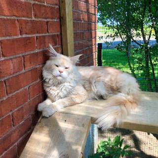 Kefir sunbathing