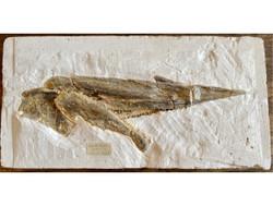 Fossil Jaw.jpg