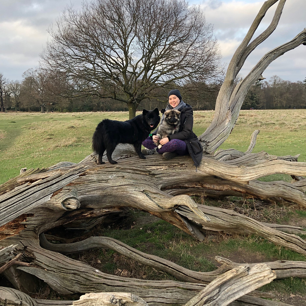Tama with her dogs in Richmond Park