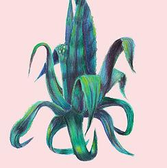 Cactus vierkant z logo_edited.jpg