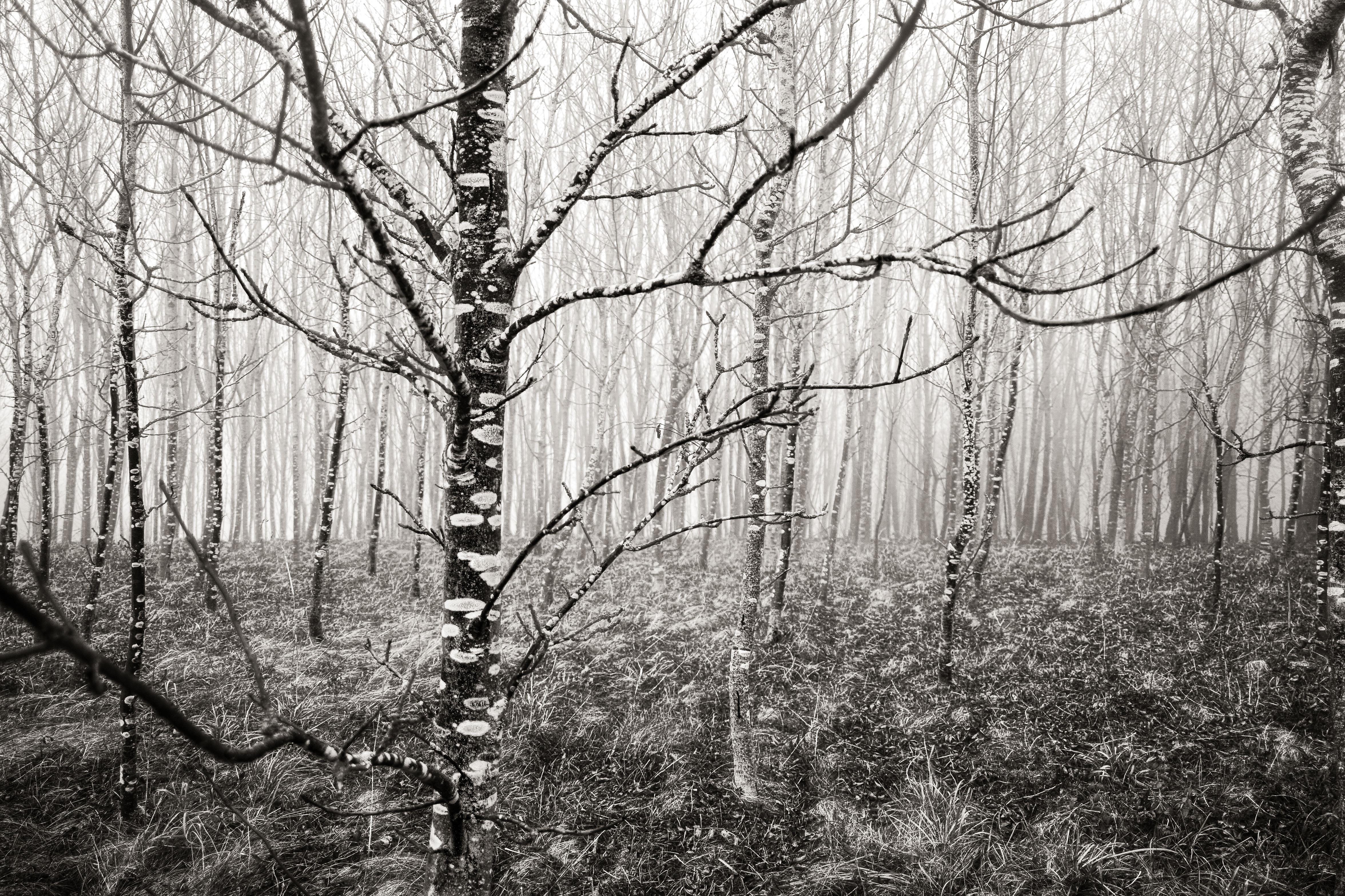 blackandwhite-Matthias-Stump-006