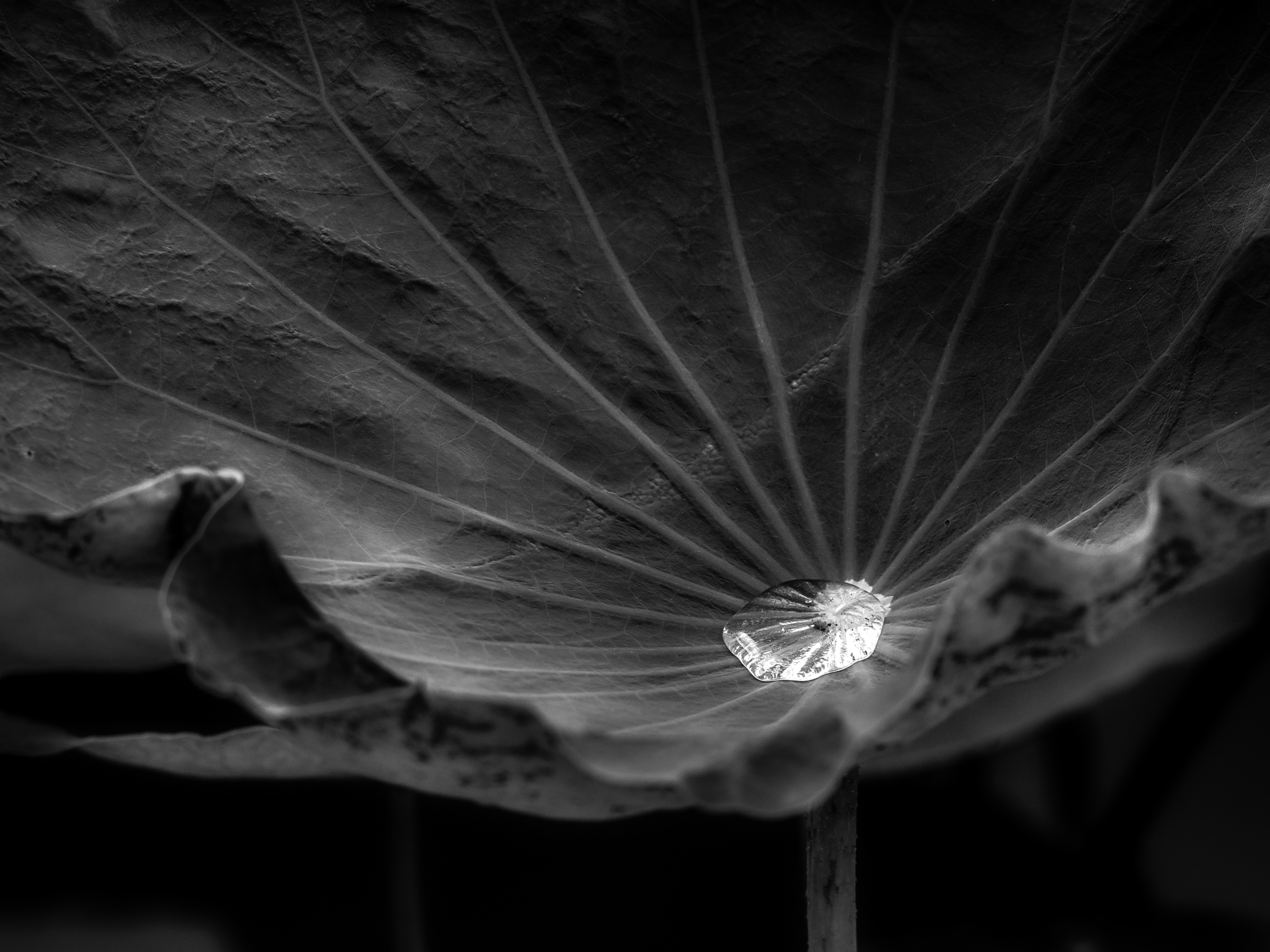 balance-Matthias-Stump-002