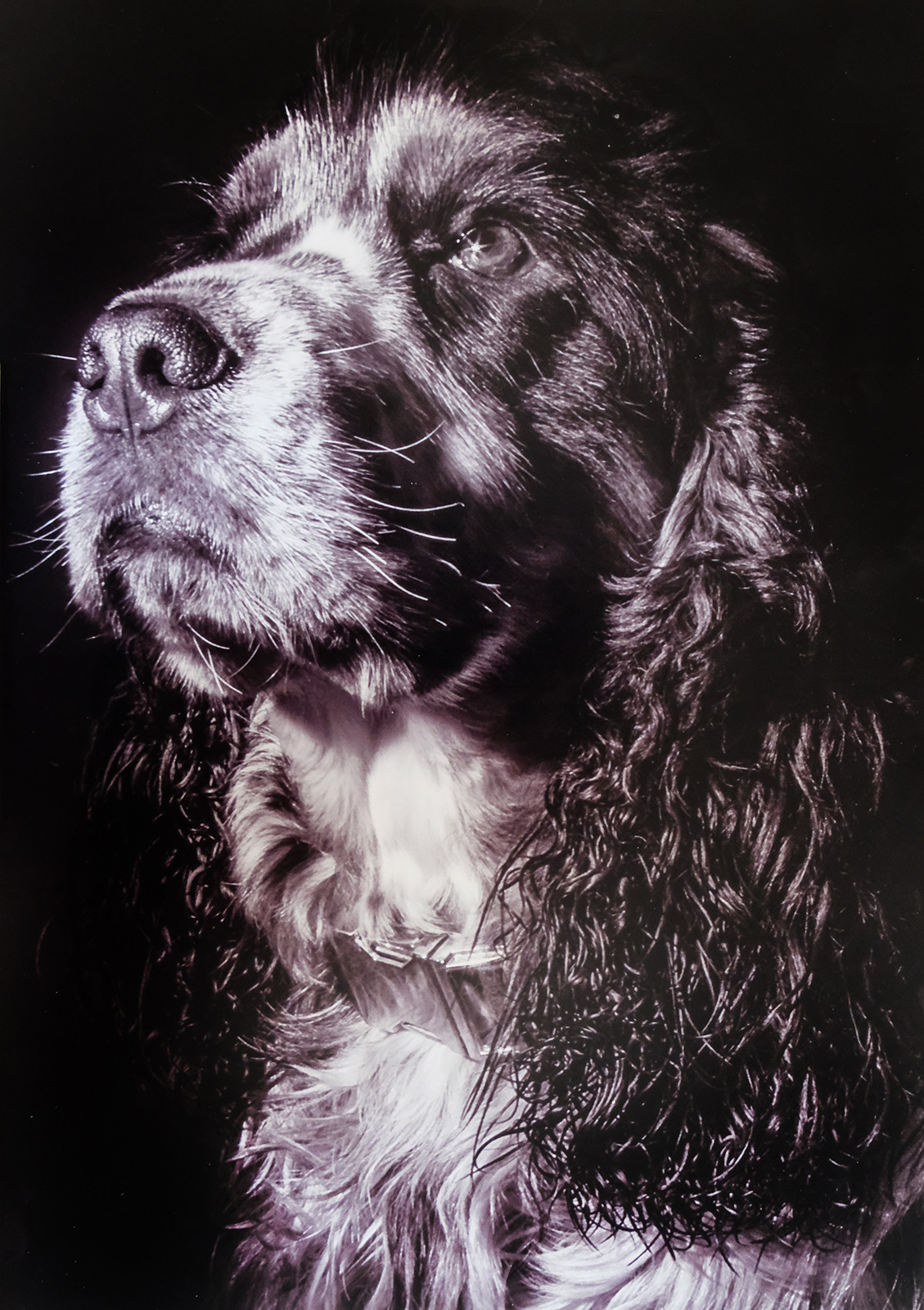 MONO - Sherlock by J McGinley (9 marks)
