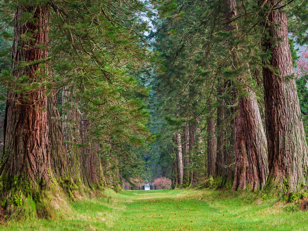 PDI - the big trees by f doherty (8 marks)