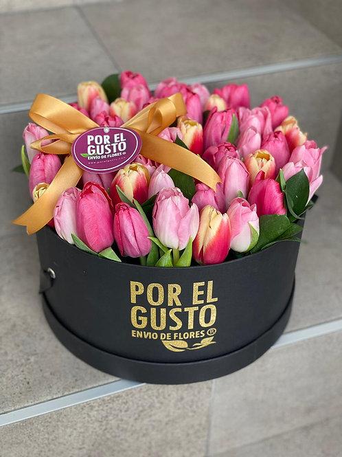 50 tulipanes pastel