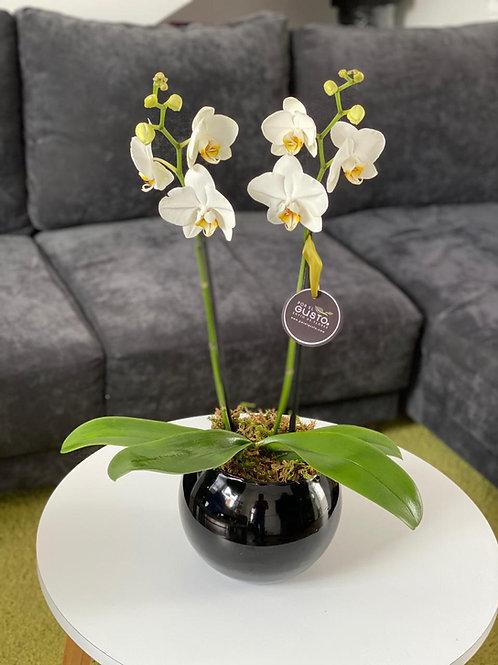 Orquídea esfera