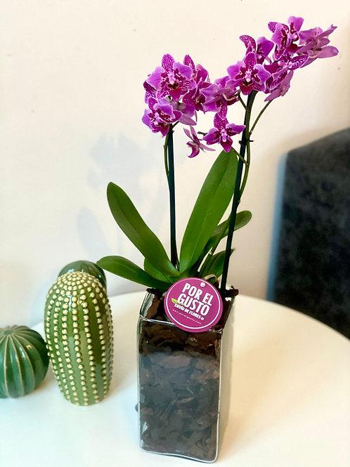 Orquídea DALÍ
