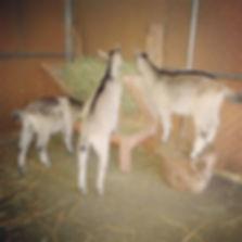 Joey, Axl, Paul