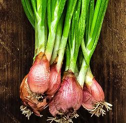 green-onion-or-scallion-on-wooden-board-