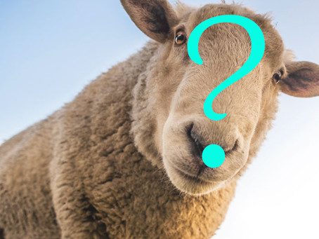 Build Your Herd Immunity (Take the Sheeple Test)