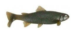Uni Cat Trout 20cm LM
