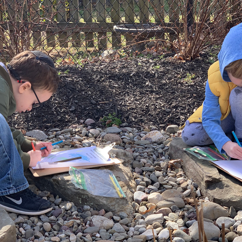 Observational drawings of spring