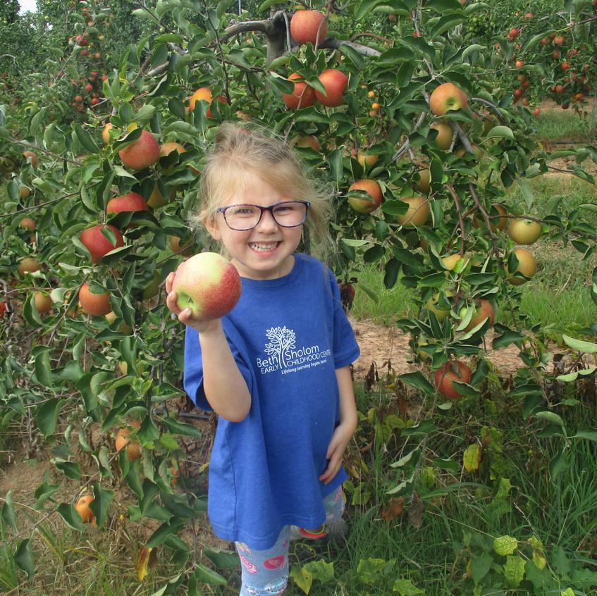 Homestead Farms apple picking