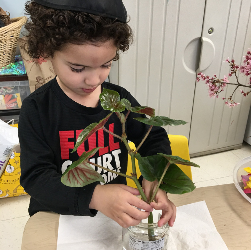 Planting plant offshoots
