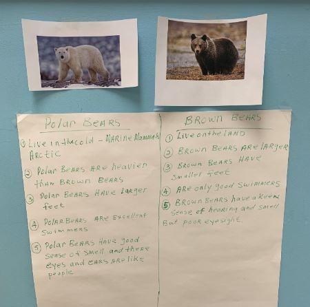 Comparing Brown vs Polar bears